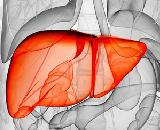 Model for Hepatitis