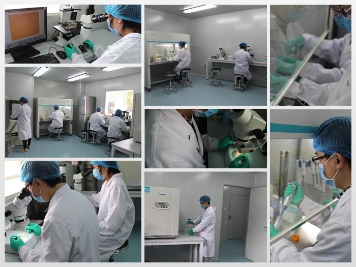原代细胞实验