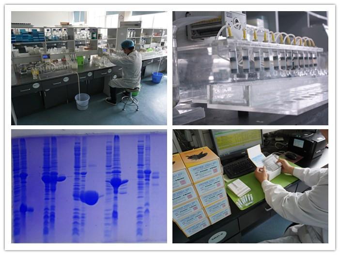 蛋白表达鉴定