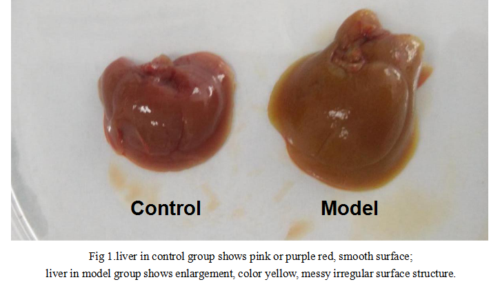 Mouse Model for Intrahepatic Cholestasis