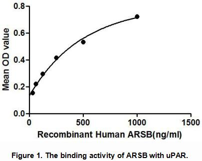 lysozyme activity Ab211113 lysozyme activity assay kit 1 1 overview lysozyme activity assay kit (ab211113) provides a convenient method for quantifying lysozyme activity in mammalian cell or tissue.