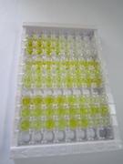ELISA Kit for Bcl2 Associated Athanogene 3 (BAG3)