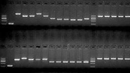 聚合酶链式反应(PCR)实验服务