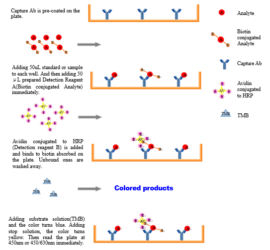 elisa enzyme linked immunosorbent assay protocol Enzyme‐linked immunosorbent assays (elisa) basic protocol 1: indirect elisa to detect specific antibodies an enzyme‐linked immunosorbent assay.